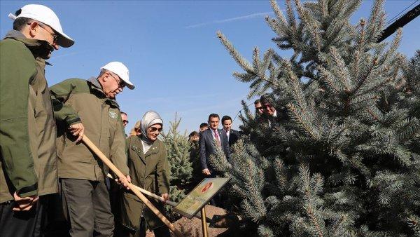 Cumhurbaşkanı Erdoğan: Orman varlığımızı 17 yılda 22 6 milyon hektara çıkardık
