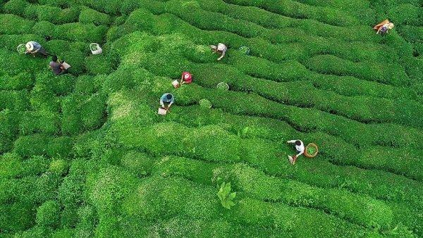 Rize çay ihracatından 9 ayda 6 4 milyon dolar kazandı