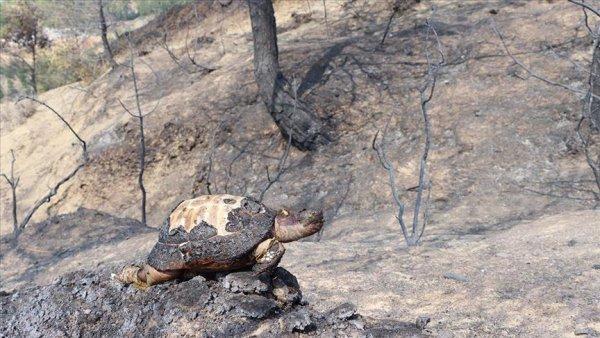 Hatay yangınının hatırlattıkları: PKK ve çevre terörizmi
