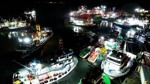 Yasaklı alan dışında kalan İğneada da 250 tekne hamsi peşinde
