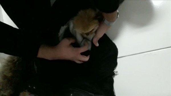 İlaçla uyuttuğu yavru köpekleri kabanının astarı içine gizlemiş