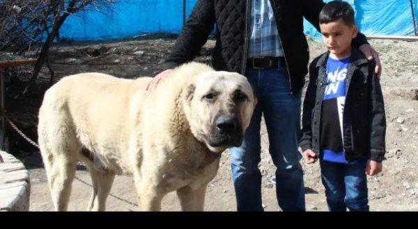 Konuşan köpek benim adım Ejder diyor