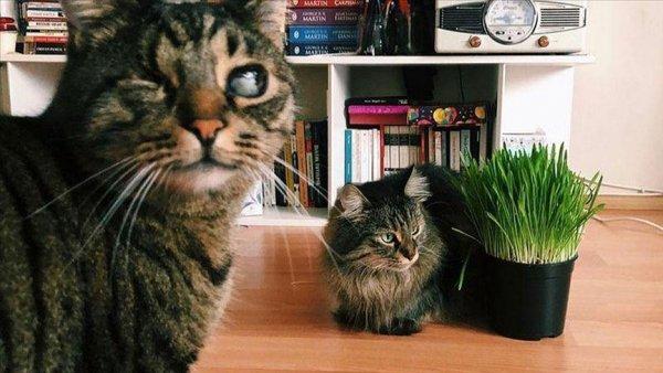 Kedilerin velayeti davası