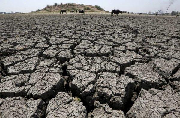 5 yılda 4 bin 700 çiftçi intihar etti