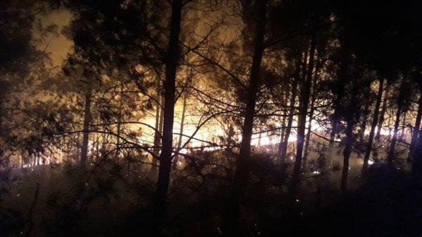 Adana da orman yangını