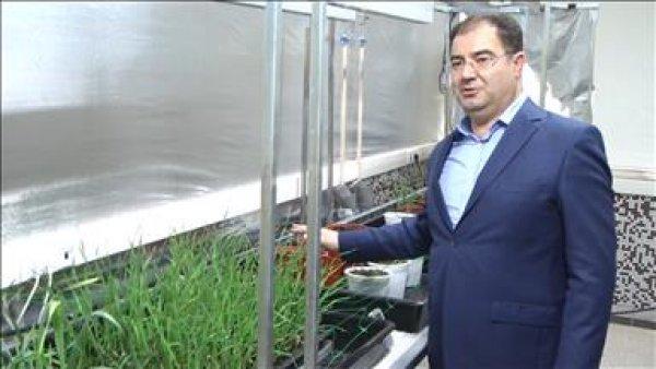 Buğdayın yetişme süresini 60 gün