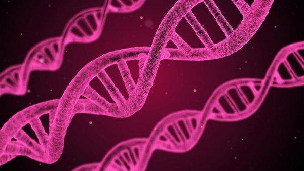 Hücrelerde DNA nın yeni bir yapısı keşfedildi