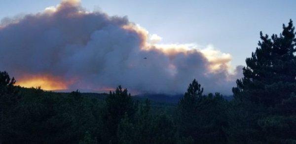 Kütahya da orman yangını